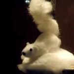 Белка Анька красавица на Кузнецком вечером. Автор фото председатель НСНБР А.Г.Огнивцев. DSCF6939