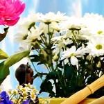 Mcrsi.ru: День рождения Будды в Школе Цигун и Кунг Фу монастыря Шаолинь. Автор фото председатель НСНБР А.Г.Огнивцев. 15052016-8